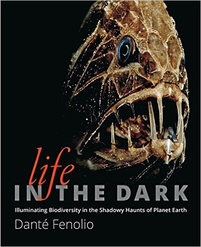 Life in the Dark cover