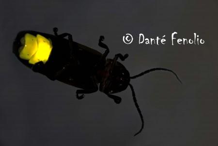 Georgia Firefly No4 LOWRES