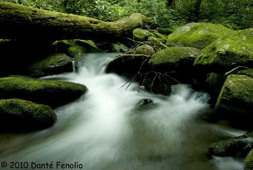 The mountain streams were beautiful...and loaded with salamanders.