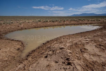 """Vernal pool full of water after a summer """"monsoon"""" rain"""