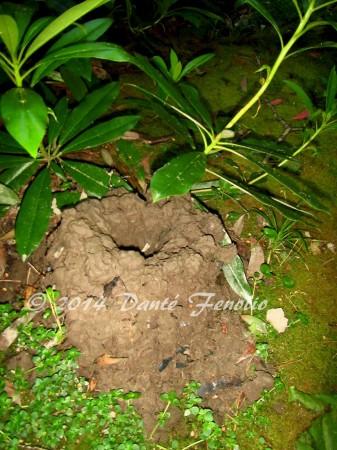 Crayfish chimney, LR-M