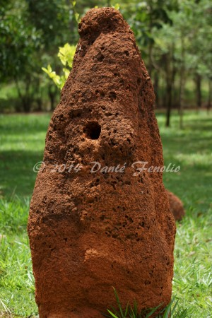Termite Mounds vastly increase the biological diversity in places like the Brazilian Cerrado.